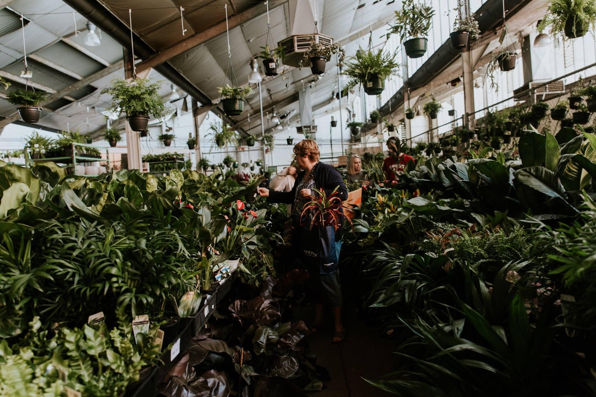 Adelaide Indoor Plant Sale
