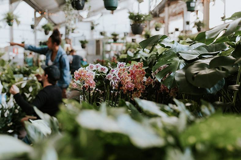 Adelaide Plant Sale Online