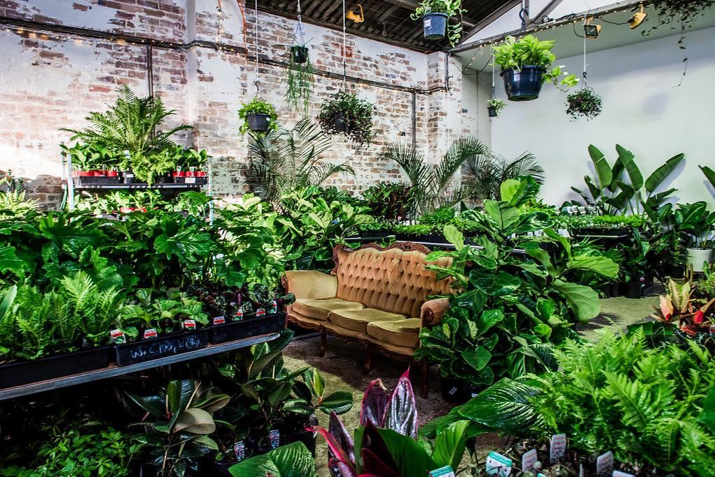 Indoor Plant Sale Online