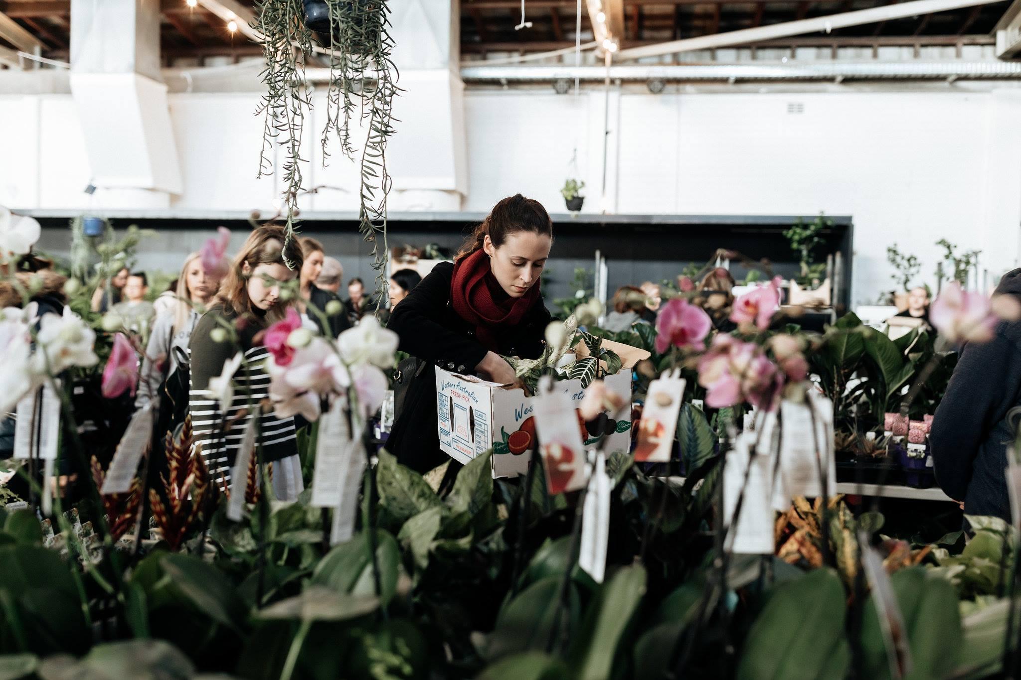 Perth Indoor Plant Sale Online