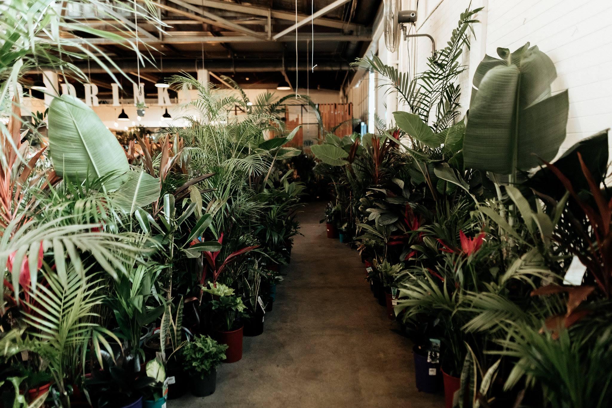 Perth - The Jungle Collective