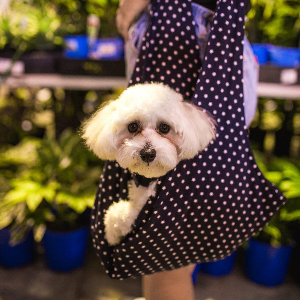dog friendly indoor plants