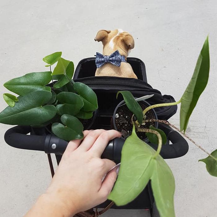 cat friendly indoor plants