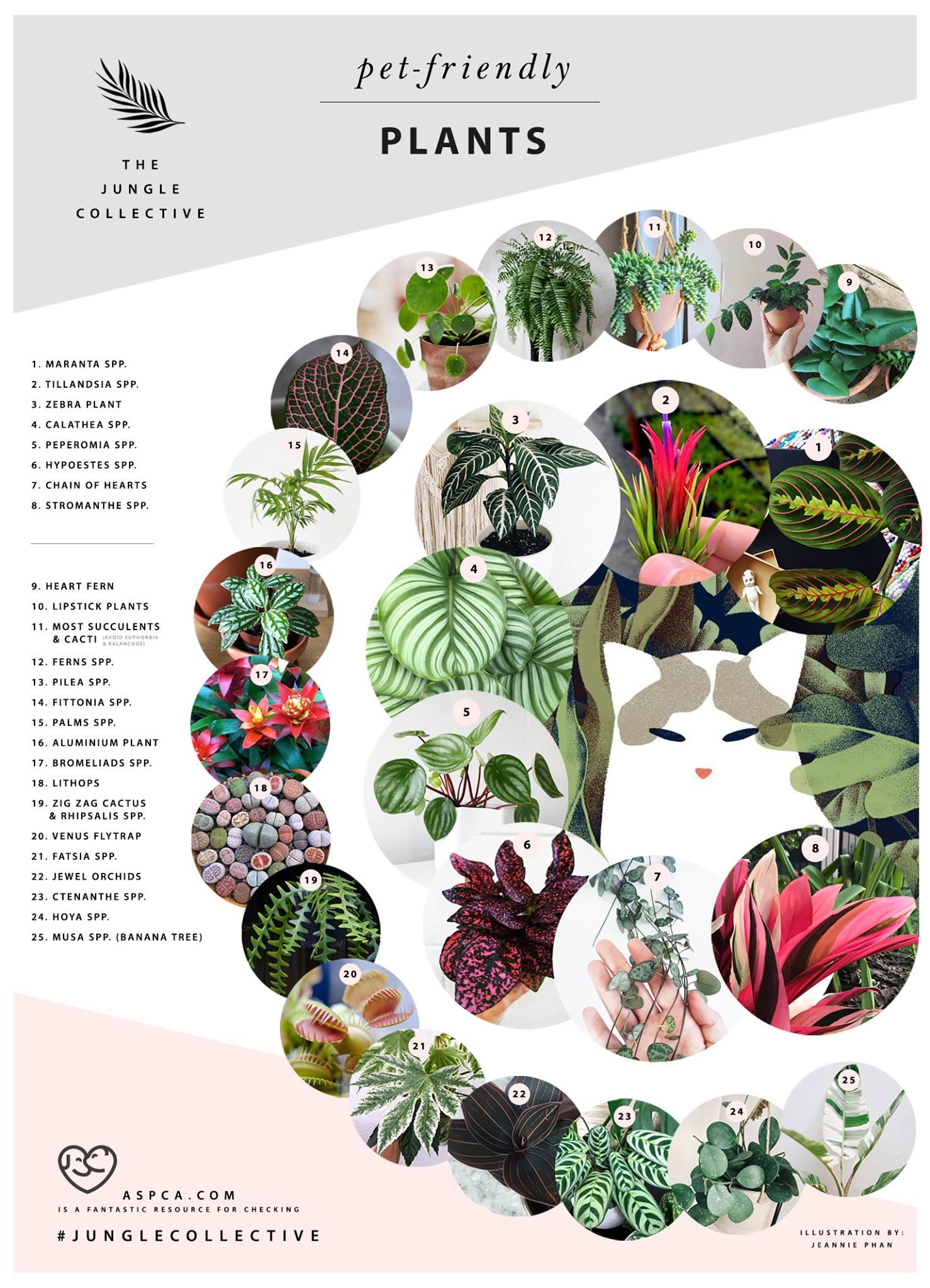 Pet Friendly Plants - The Jungle Collective