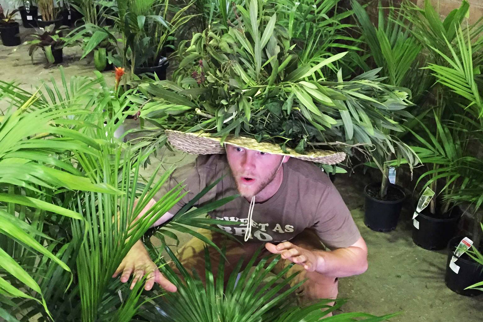 The Jungle Collective Plant Sale